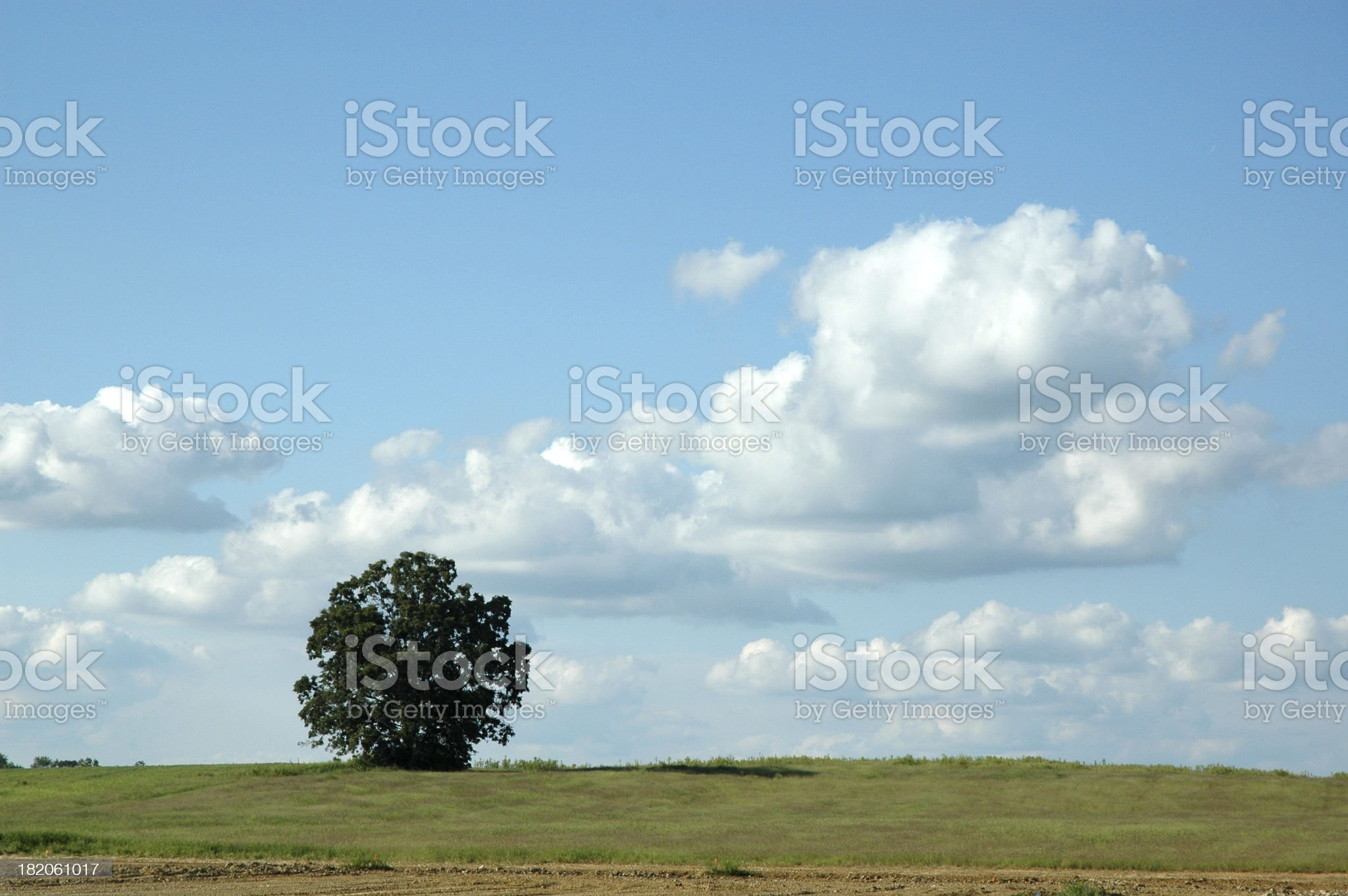 Rural Farm Treescape with Cloud-Dotted Sky and Space for Copy royalty-free stock photo