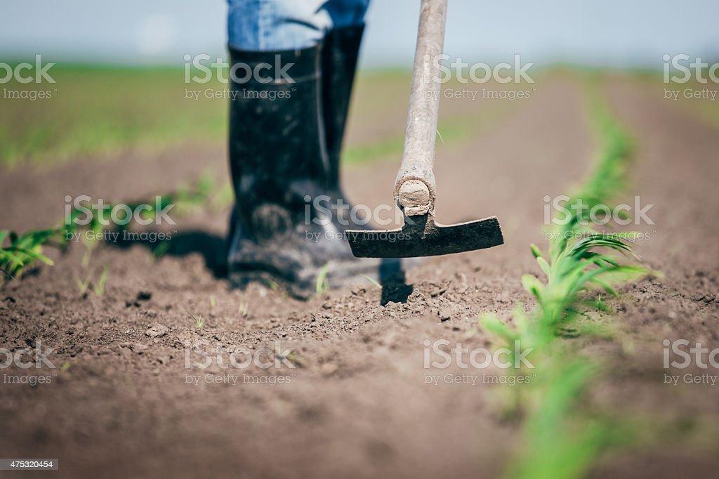 Rural farmer hoes beans in his garden stock photo