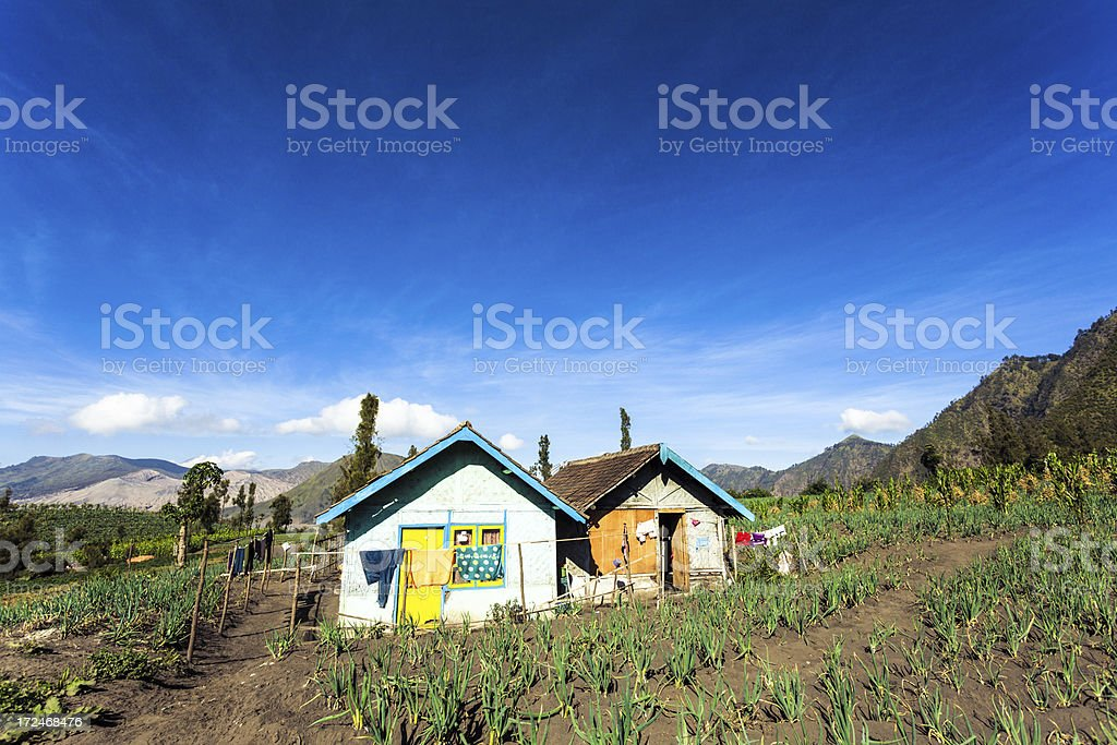Rural Farmhouse and Cultivated Fields in Indonesia royalty-free stock photo