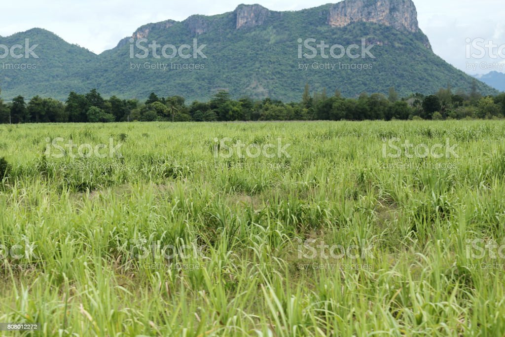 Rural farmland to grow sugarcane in Kanchanaburi at Thailand. stock photo