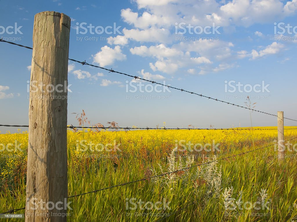 Rural Fence Post & Field royalty-free stock photo