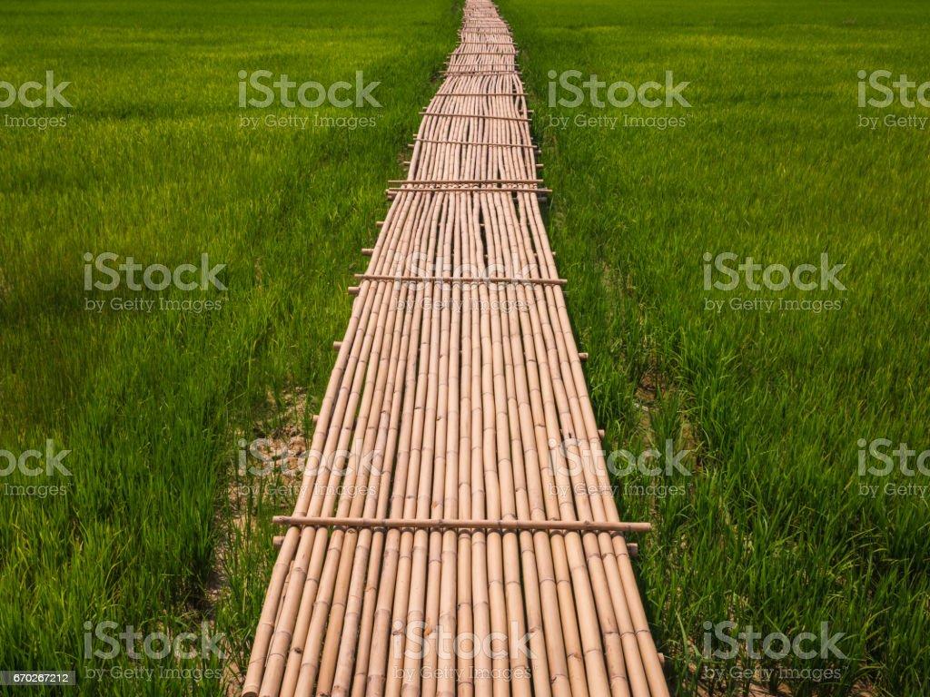 Rural Green rice fields and bamboo bridge. stock photo
