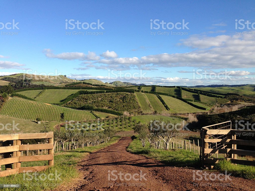 Rural green rolling hills in the countryside stock photo