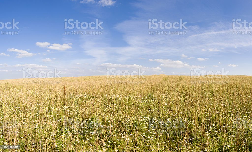 Rural horizon royalty-free stock photo