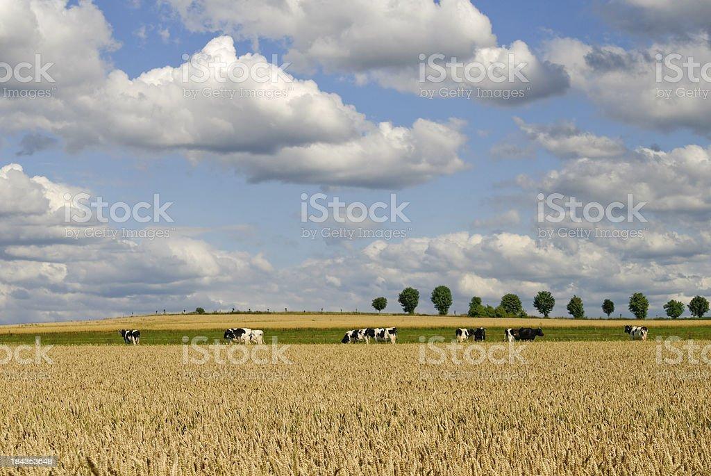 Rural idyll stock photo