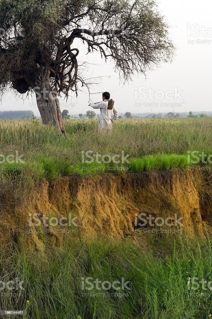 Rural Indian Young Farmer Near  Tree in Wheat Fields. royalty-free stock photo