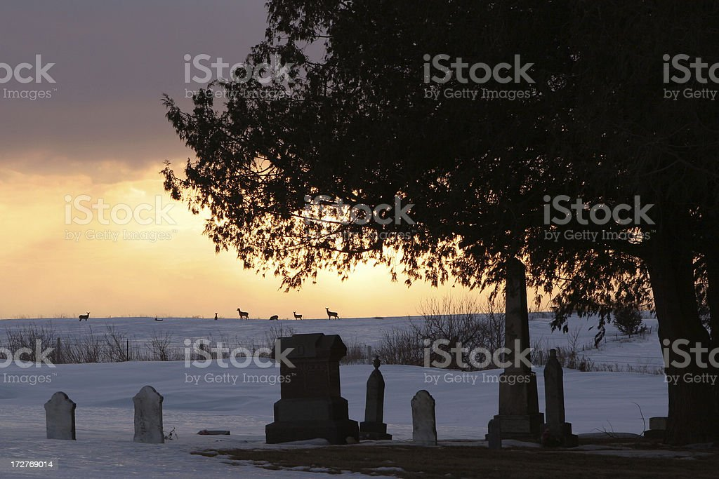 Rural Iowa Cemetery and Tree at Sunset with Deer stock photo