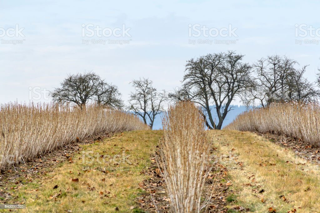 rural landscape at early spring time stock photo