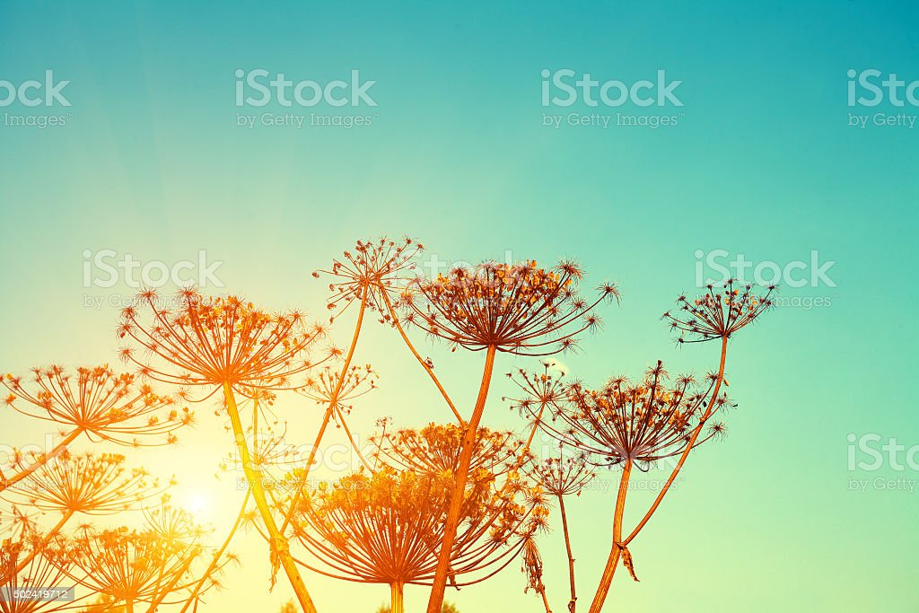 Rural landscape. Autumn field at sunset stock photo