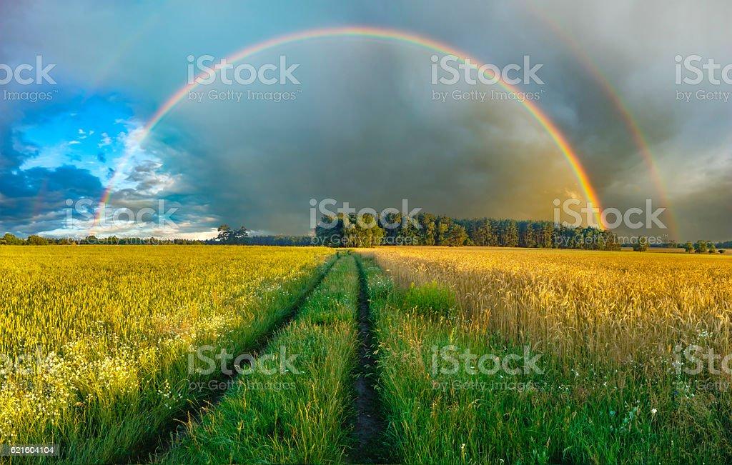 rural landscape, field, grain,rainbow stock photo