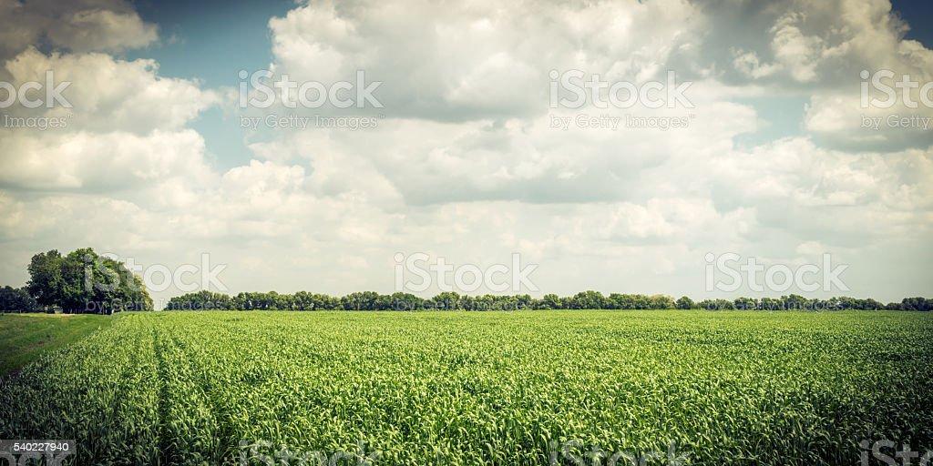 Rural landscape in Europe. Wheat field stock photo