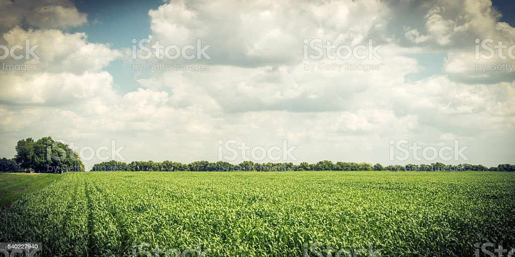 Rural landscape in Europe. Wheat field stock photo