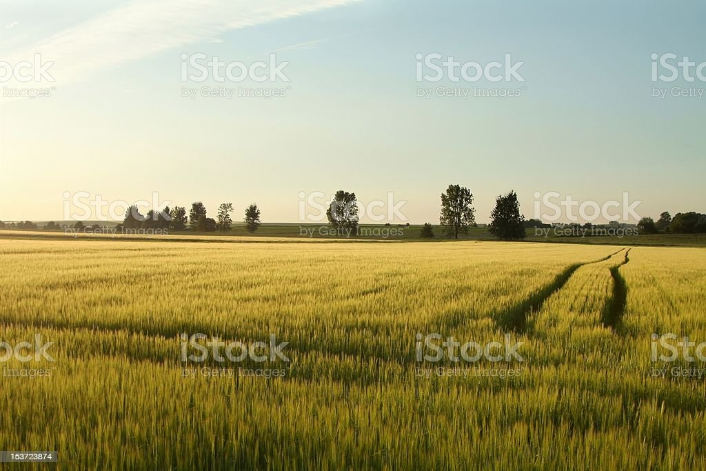 Rural landscape in the afternoon sun royalty-free stock photo
