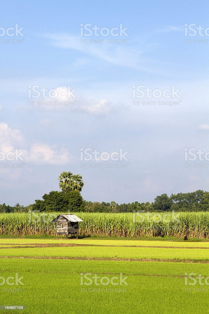 Rural landscape of rice fields in Thailand. royalty-free stock photo