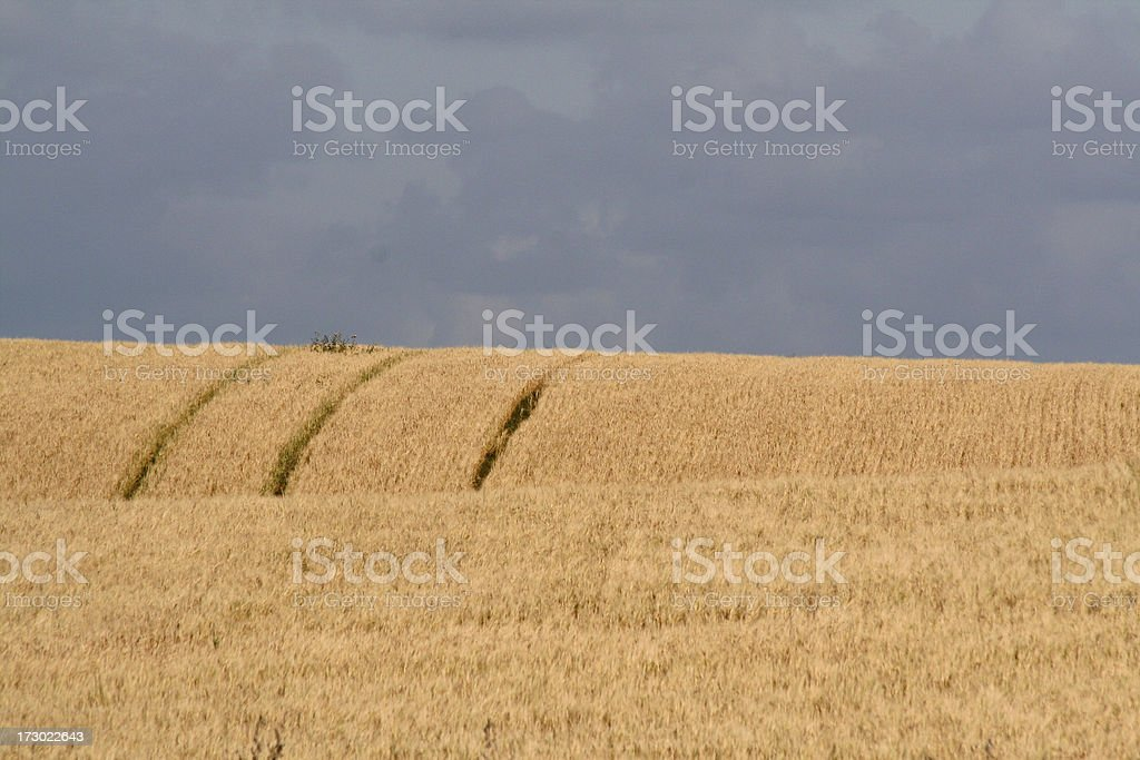 Rural landscape. stock photo