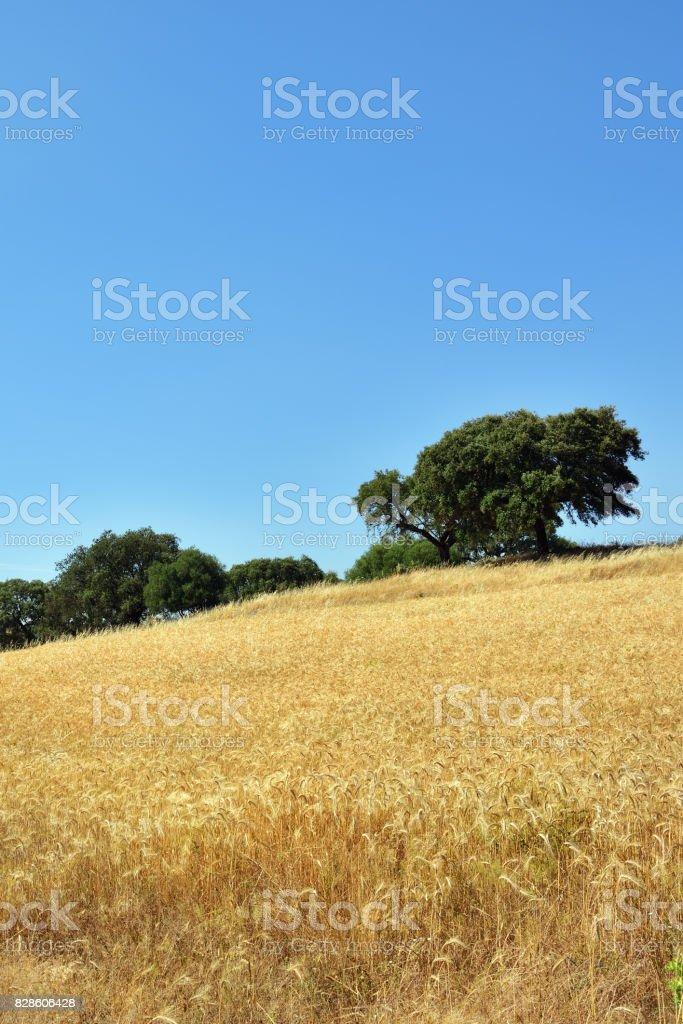 Rural landscape, Portugal stock photo