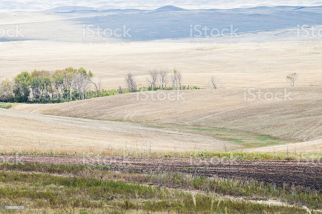 Rural landscape. Steppe royalty-free stock photo
