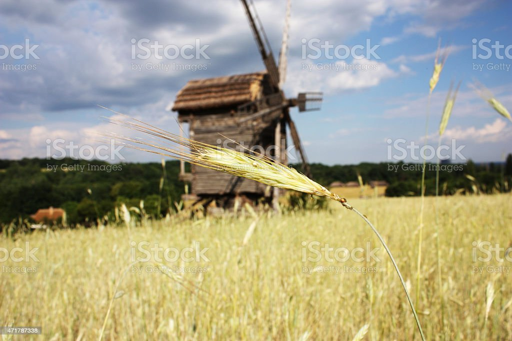 rural landscape with a wheat germ and a windmill stock photo