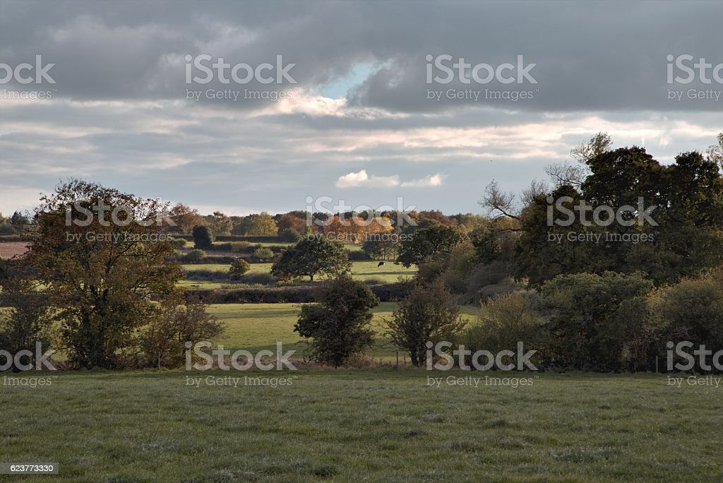 Rural landscape with fields, Tarvin, Cheshire, England stock photo