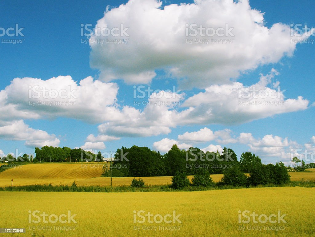 Rural landscape with fluffy clouds royalty-free stock photo