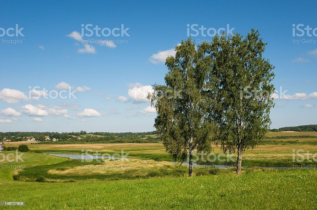 rural landscape with two trees royalty-free stock photo