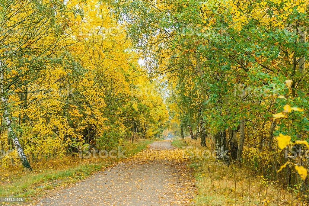 Rural lane receding through colorful woodland stock photo