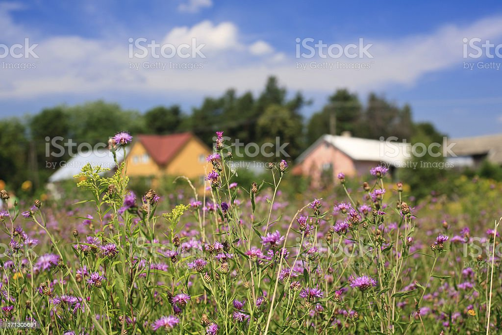 Rural meadow stock photo