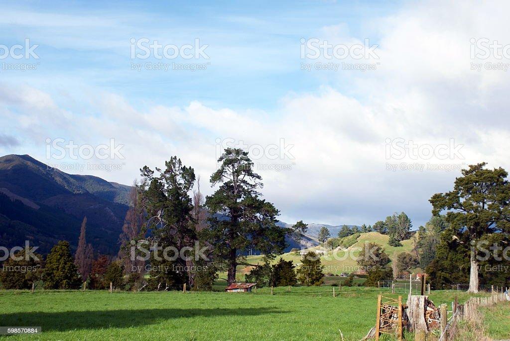 Rural New Zealand Scene stock photo