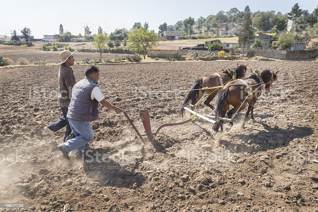 Rural old fashioned corn plowing stock photo