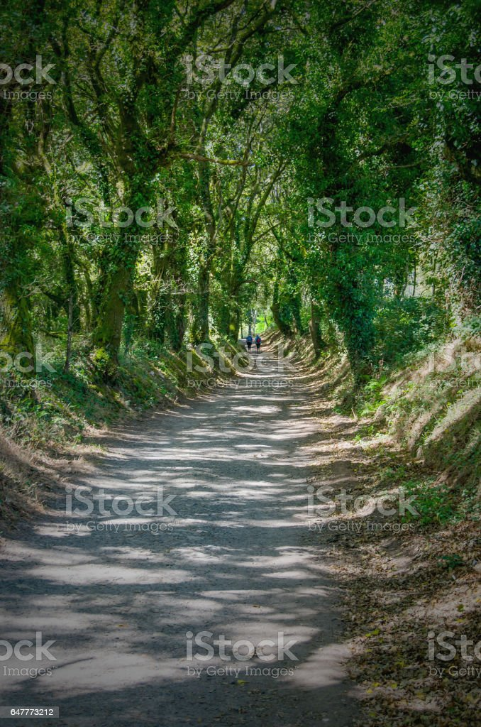 Rural path covered with trees in Camino de Santiago stock photo