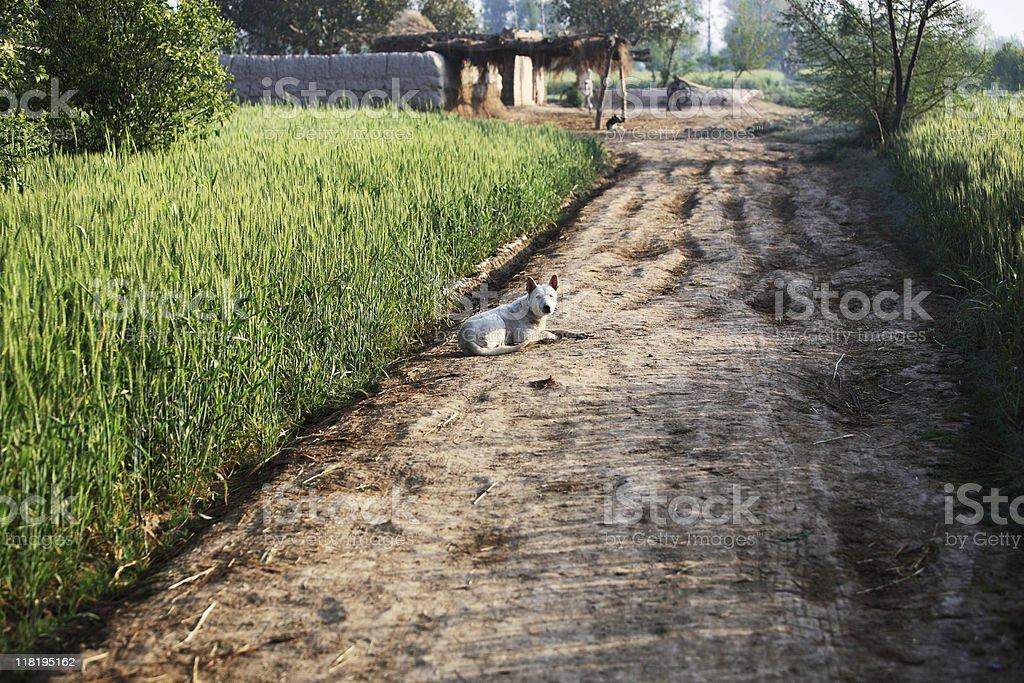 Rural Punjab stock photo