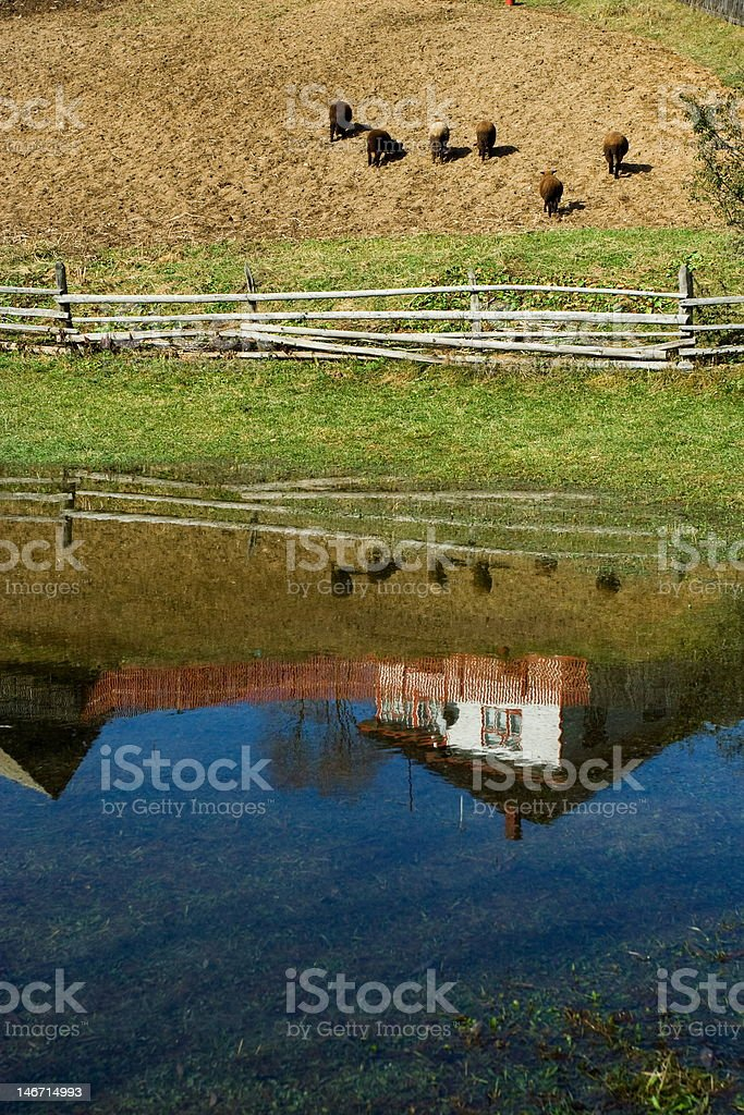 Rural reflections royalty-free stock photo