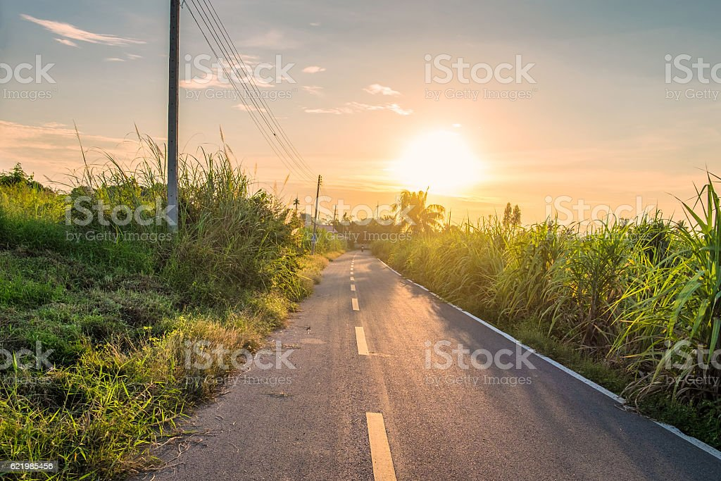 Rural road and sugar cane at sunset stock photo