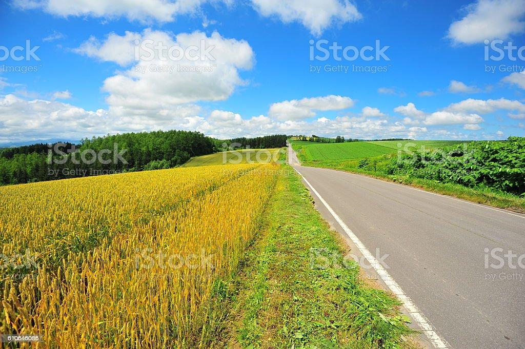Rural Road at Countryside of Biei, Hokkaido, Japan stock photo