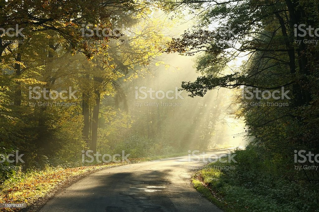 Rural road in autumn forest at dawn royalty-free stock photo