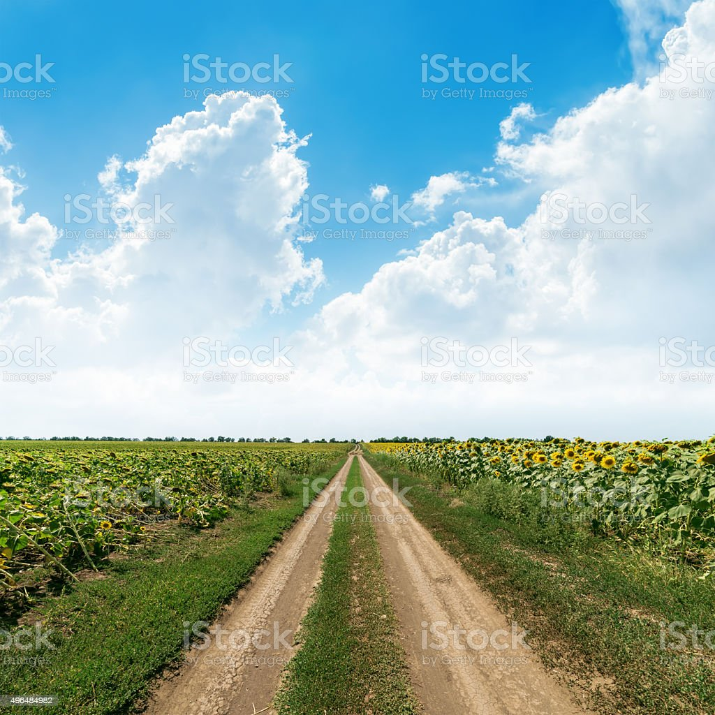 rural road in green fields under clouds in blue sky stock photo