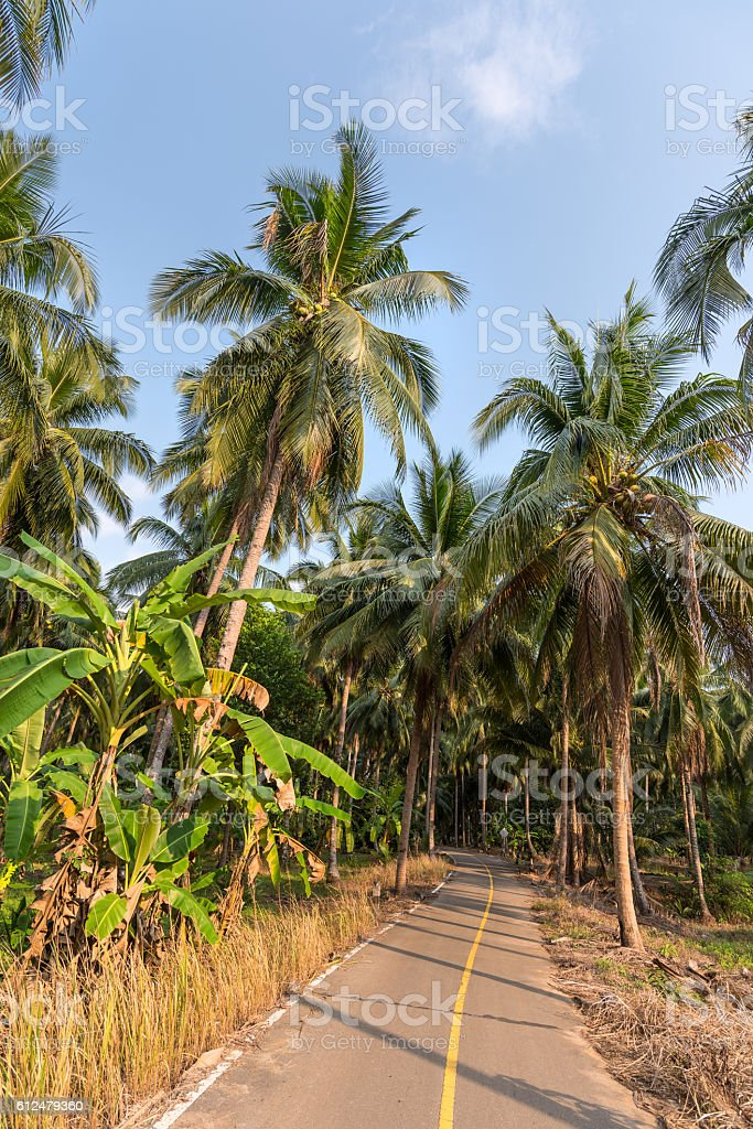 rural road in the palms forests of Koh Chang island stock photo