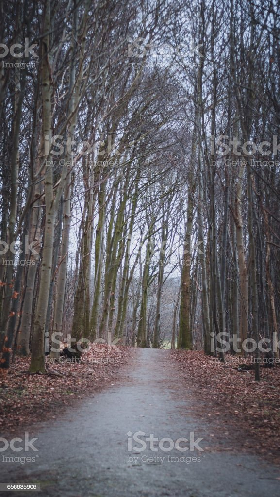 Rural road lined by trees stock photo