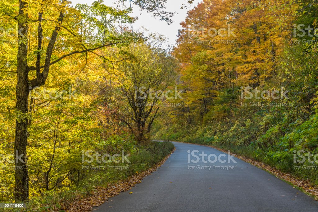 A rural road through a forest in the fall stock photo