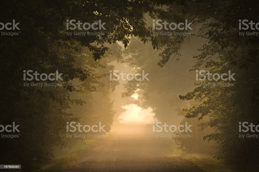 Rural road under a canopy of trees. royalty-free stock photo