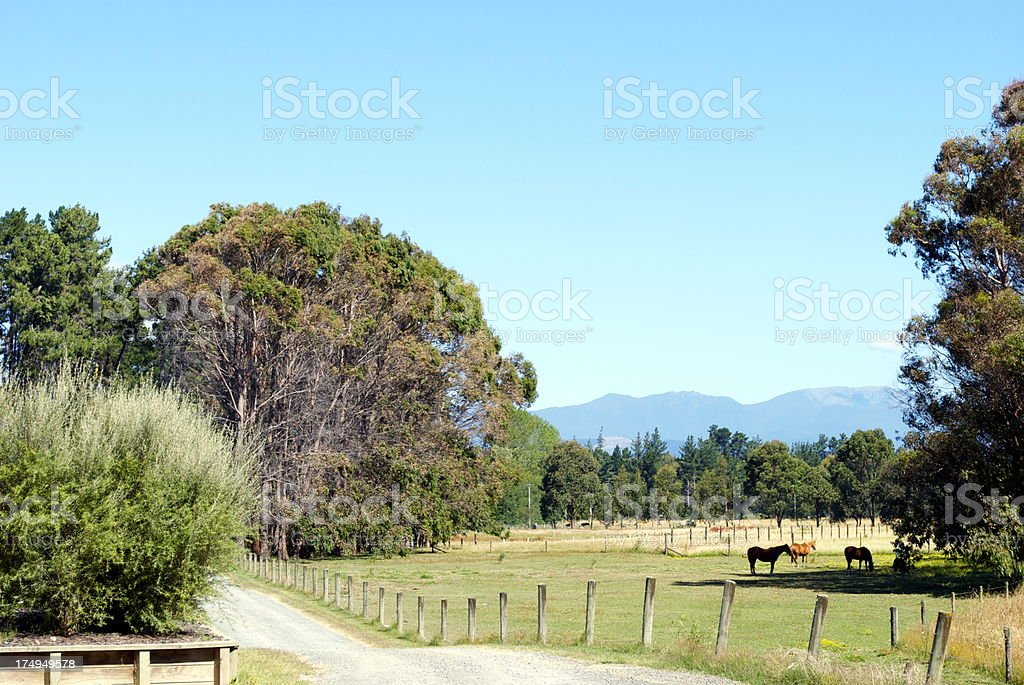 Rural Scene and Horses, New Zealand's South Island royalty-free stock photo