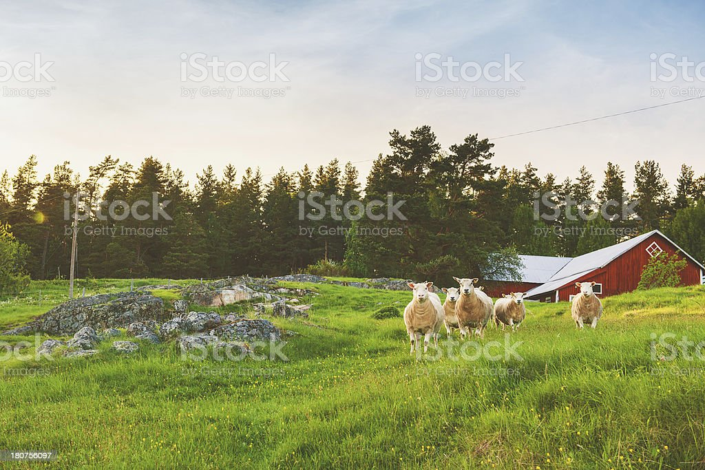 Rural scene in Linköping Sweden royalty-free stock photo