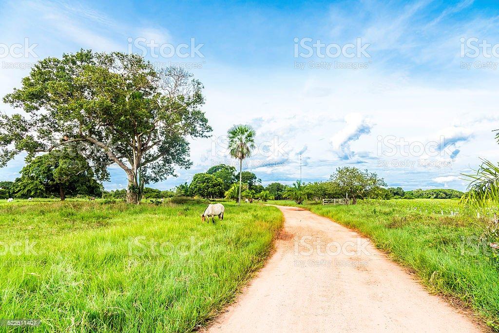 Rural scene in Pantanal, Brazil stock photo
