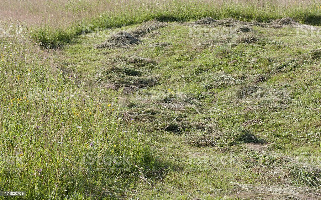 Rural Scene royalty-free stock photo