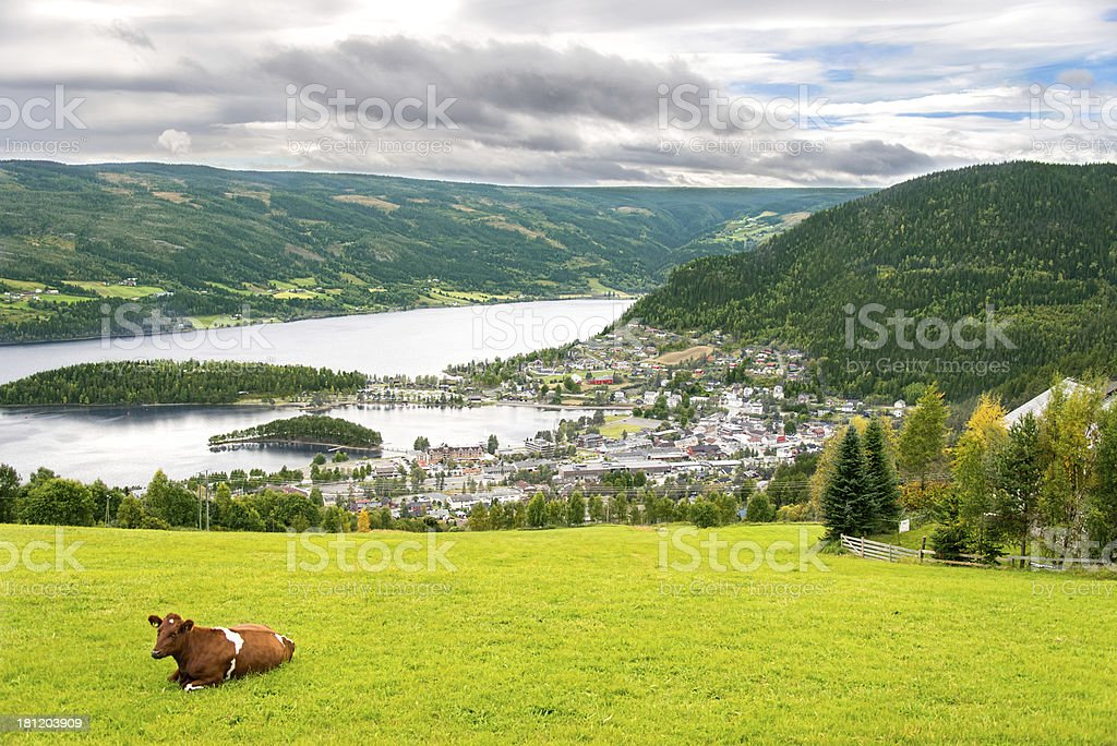 Rural scene with cow in Norway royalty-free stock photo