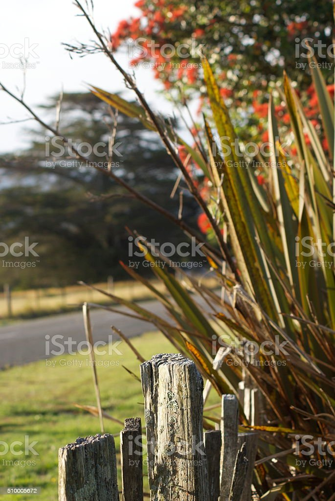 Rural Scene with Fence and Harakeke (New Zealand Flax) stock photo