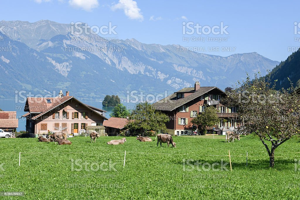 Rural scenery of Iseltwald in Jungfrau region on Switzerland stock photo