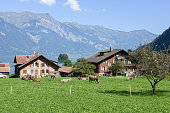 Rural scenery of Iseltwald in Jungfrau region on Switzerland