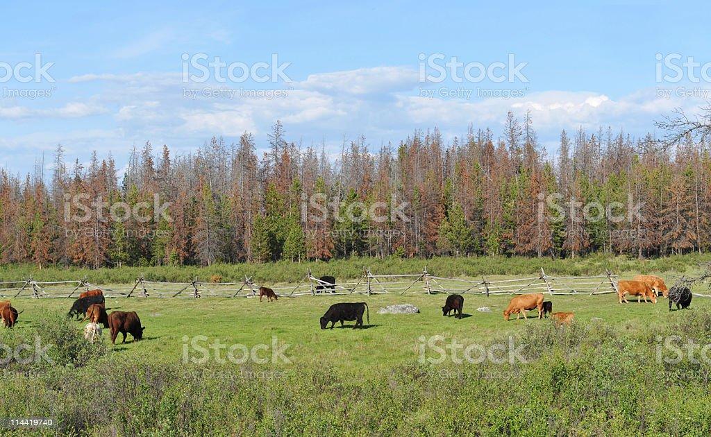 Rural scenery royalty-free stock photo
