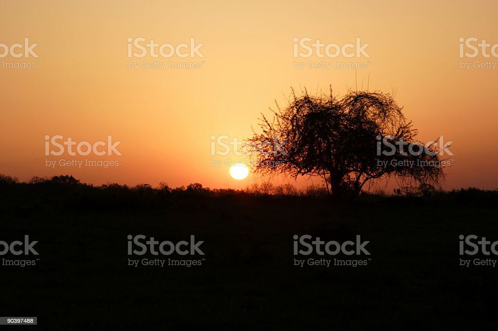 rural scenes - dawn silhouette royalty-free stock photo